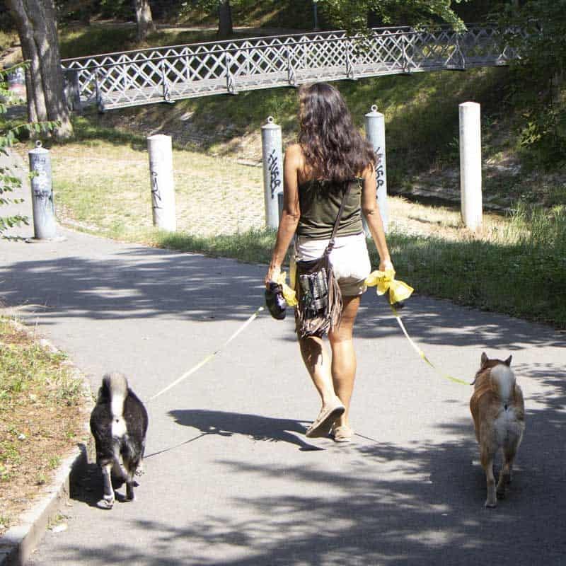 hundespazierdienst-binningen