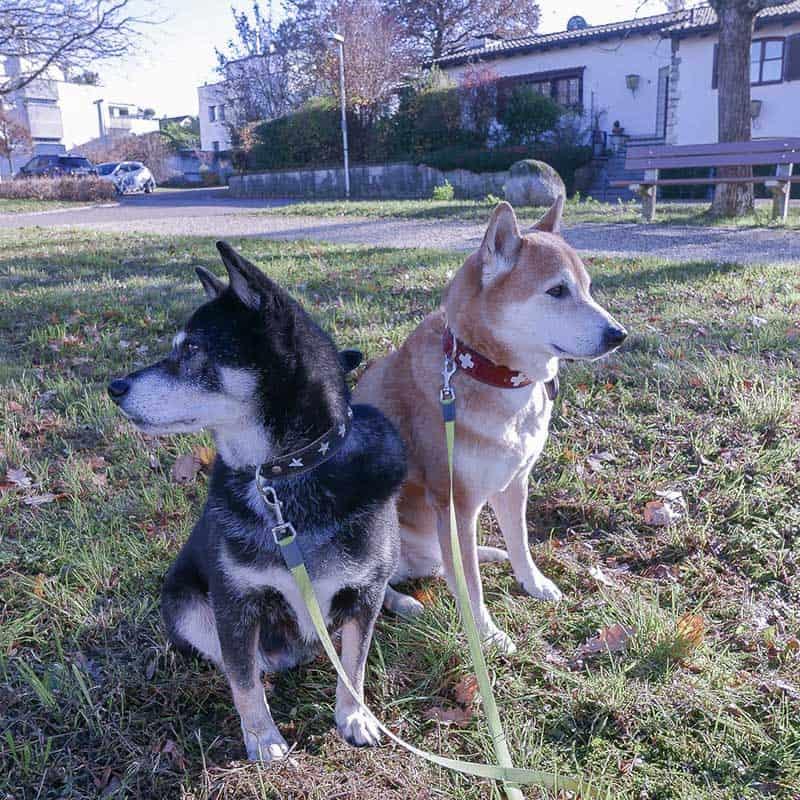 hundespazierdienst-bruderholz