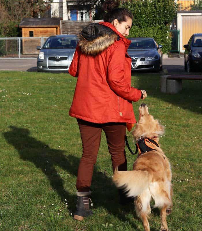 hundetrick-bailey-3